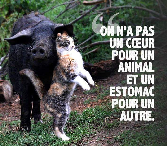 """""""On n'a pas un cœur pour un animal et un estomac pour un autre""""."""