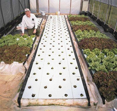 Growing Magazine - Floating Lettuce! - April, 2008 - With Dr. Bernard A. (Bernie) Kratky's floating hydroponic system in high tunnels, multiple crops of lettuce can be produced throughout most of the year with no electricity. #hydroponicslettuce #HydroponicsGardening