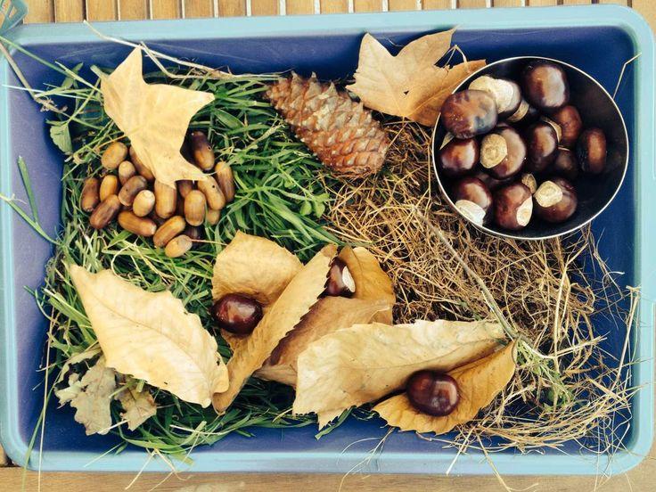 bac sensoriel d'automne avec nos trouvailles de la forêt.  Objectif : éveil sensoriel