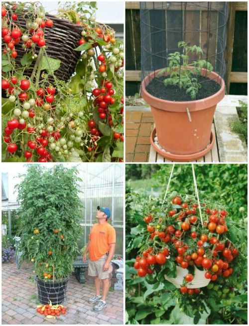 She found 35 fruits and veggies that grow really well in pots.
