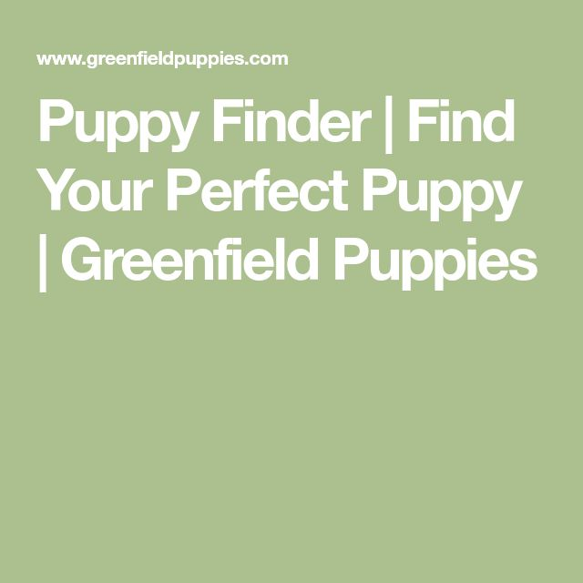 Puppy Finder | Find Your Perfect Puppy | Greenfield Puppies
