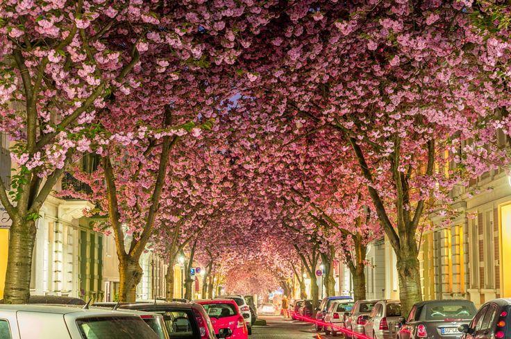 blossoms_15