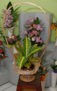 Flower Baskets And Stands - Hat