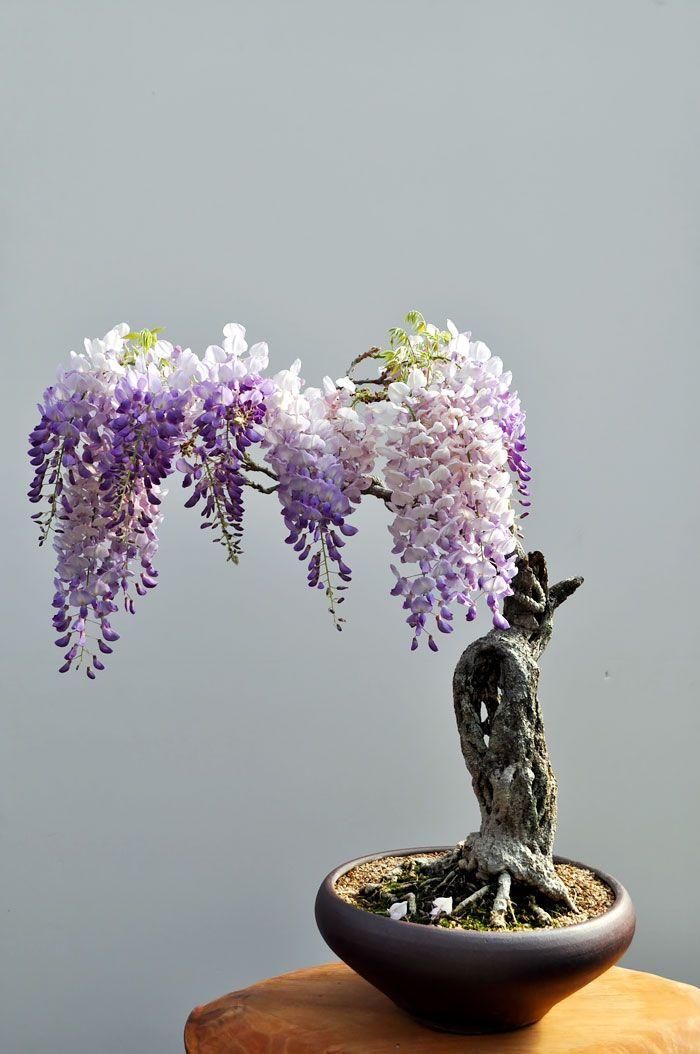 arvores bonsai 10                                                                                                                                                                                 Mais