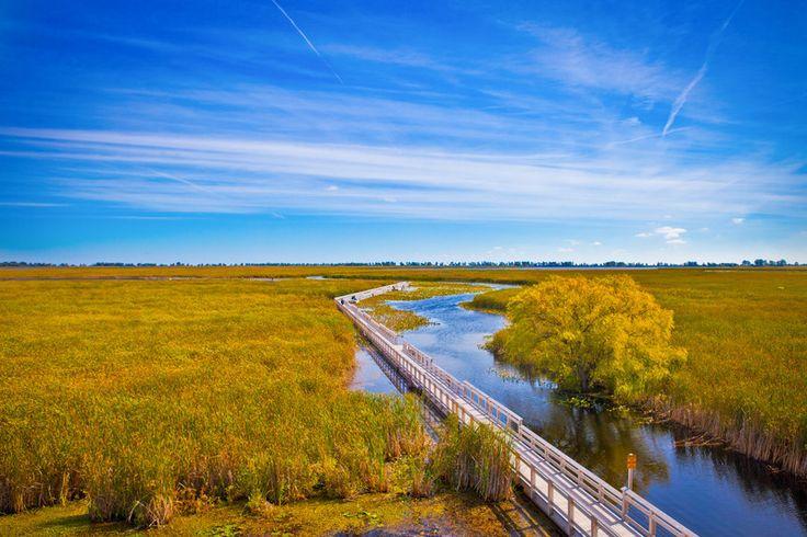 The Point Pelee Marsh Boardwalk in Point Pelee National Park, Ontario