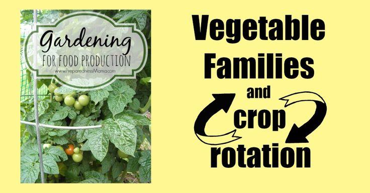 Best crop rotation practices using the vegetables families | PreparednessMama