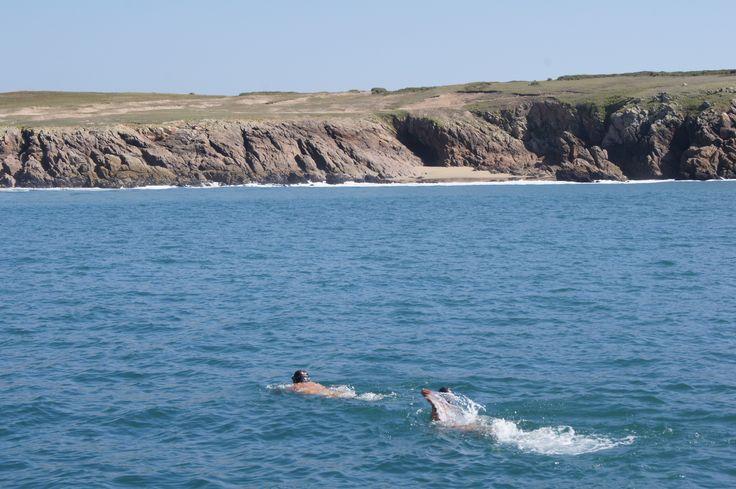 From Biarritz to Freedom #swim #wild