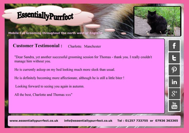 Customer Testimonial of EssentiallyPurrfect #mobile #cat #catgrooming service. Charlotte #Manchester