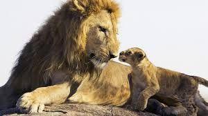 Resultado de imagen de foto de un leo y su cachorro