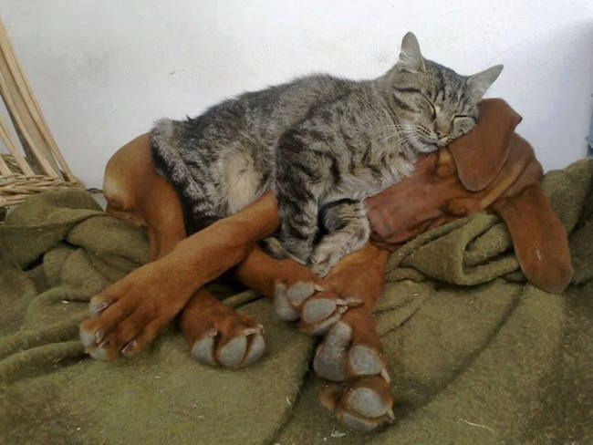 The Best Funny Pictures Of Today's Internet RuinMyWeek.com #funny #pics #pictures #photos #humor #comedy #hilarious #cute #cat #cats #dogs #dog