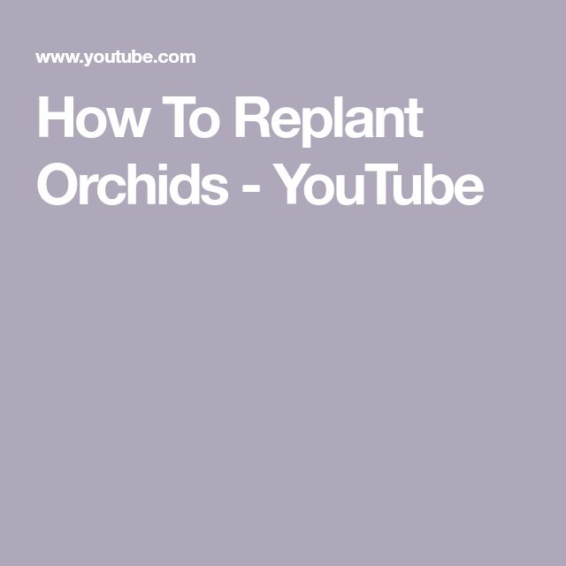 How To Replant Orchids - YouTube