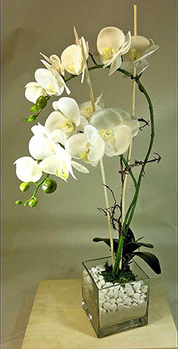 Orchidej Em 2020 Arranjos De Flores Pequenos Arranjos De Flores