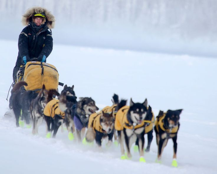 Green Boots. Yukon Quest International Sled Dog Race on Wednesday, February 11, 2015 in Dawson City, Yukon