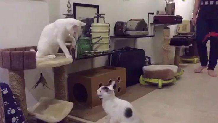 My Cat at the Adoption Center https://www.youtube.com/watch?v=-jrFeqGOj-Y