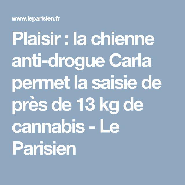 Plaisir : la chienne anti-drogue Carla permet la saisie de près de 13 kg de cannabis - Le Parisien