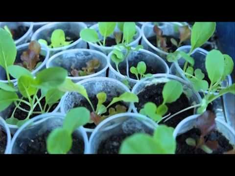 Vida & Saúde (TV Novo Tempo) Como começar a plantar em casa (Bloco 1) | Exibição: 15/07/2014 www.novotempo.com/vidaesaude Tem novidade no Vida & Saúde. É a s...