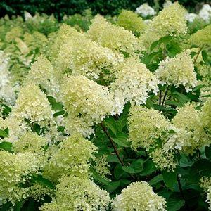 RHS Chelsea Flower Show tickets / RHS Gardening