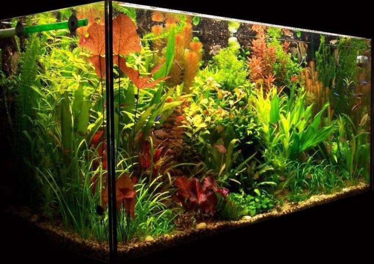 Lighting For A Planted Aquarium Red Lights Aquariums