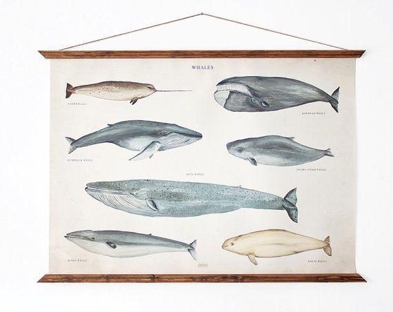 LARGE A1 Whales Canvas poster - vintage illustration educational chart illustration WAP2001