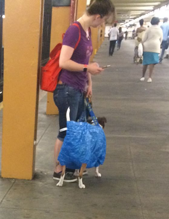 Nyc Will Only Let You Bring A Dog On The Subway If It Can