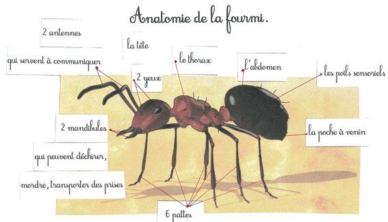 fourmi maternelle - Recherche Google