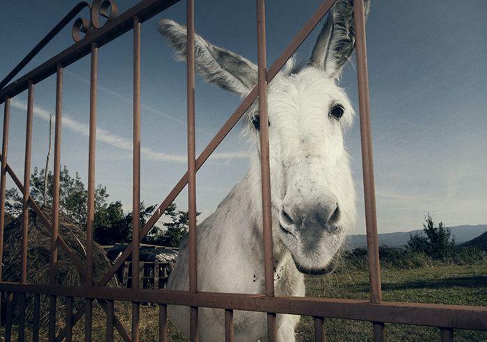 De x-factor van Extremadura Een enkele keer houdt een dorp zich verscholen achter een bergweggetje alsof het aarzelt zich in één keer bloot te geven. Jarilla, ten noorden van Plasencia, weggestopt achter velden vol kurkeiken en stenen stapelmuurtjes met klaprozen, is zo'n dorp.   www.Nomadandvillager.com ©Nicole Franken en Anneke de Bundel