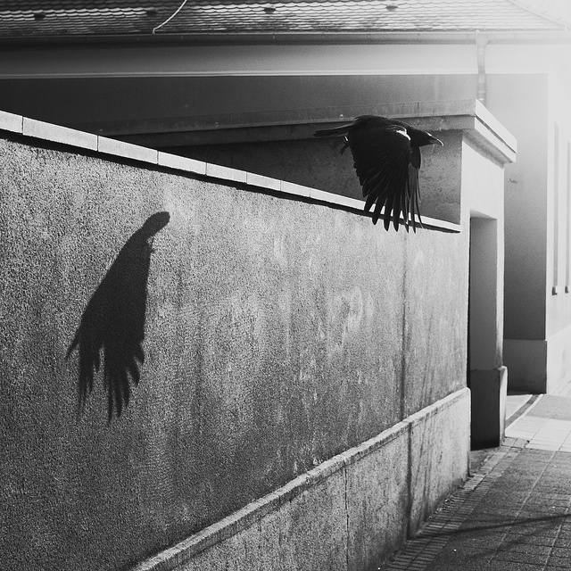 VI  Icicles filled the long window  With barbaric glass.  The shadow of the blackbird  Crossed it, to and fro.  The mood  Traced in the shadow  An indecipherable cause.