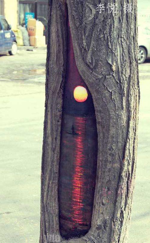 Artist makes bare wood on public trees look like holes, adds wildlife [12 pics]