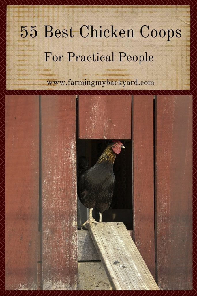 55 Best Chicken Coops for Practical People by Farming My Backyard