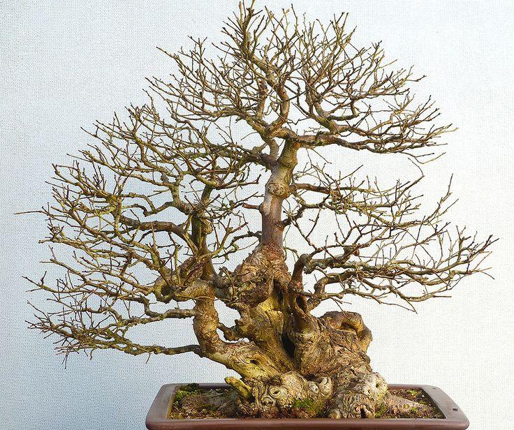 Bonsai 2088 bonsai garden bonsai bonsai tree