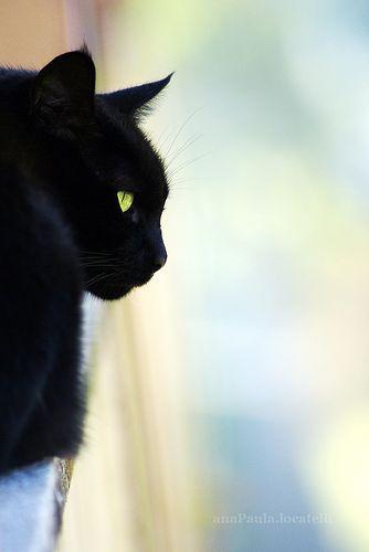 Black cats are divine, loving creatures <3