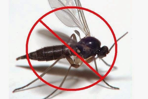 Home Remedies for gnats We'll just in case you're wondering if you've ever had fruit flies and you know they're pretty tough to get right up you can go out andbuy yourself some traps but what i found is just a simple solution with someapple cider vinegar saran wrap some...