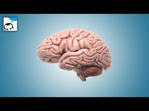 Cerveau droit cerveau gauche faites ce test de 5 seconde pour savoir lequel vous utilisez - YouTube