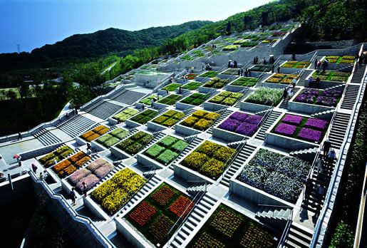 roof tops of mass housing. using plants to absorb heat, energy efficiency in passive cooling