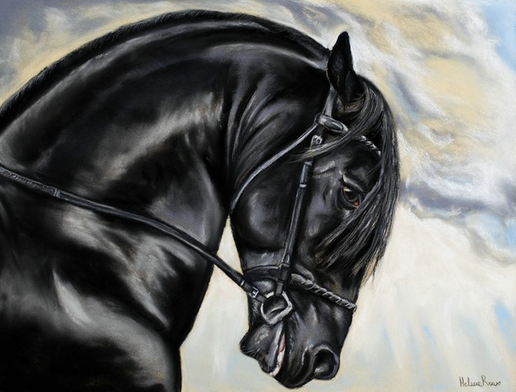 dessin d 39 un cheval frison r alis au pastel sec drawing of friesian horse realized in pastel. Black Bedroom Furniture Sets. Home Design Ideas