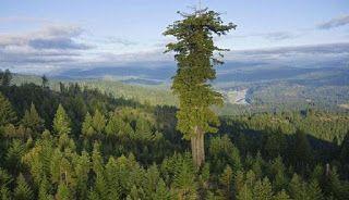 Descopera plantele: Curiozitati despre copaci