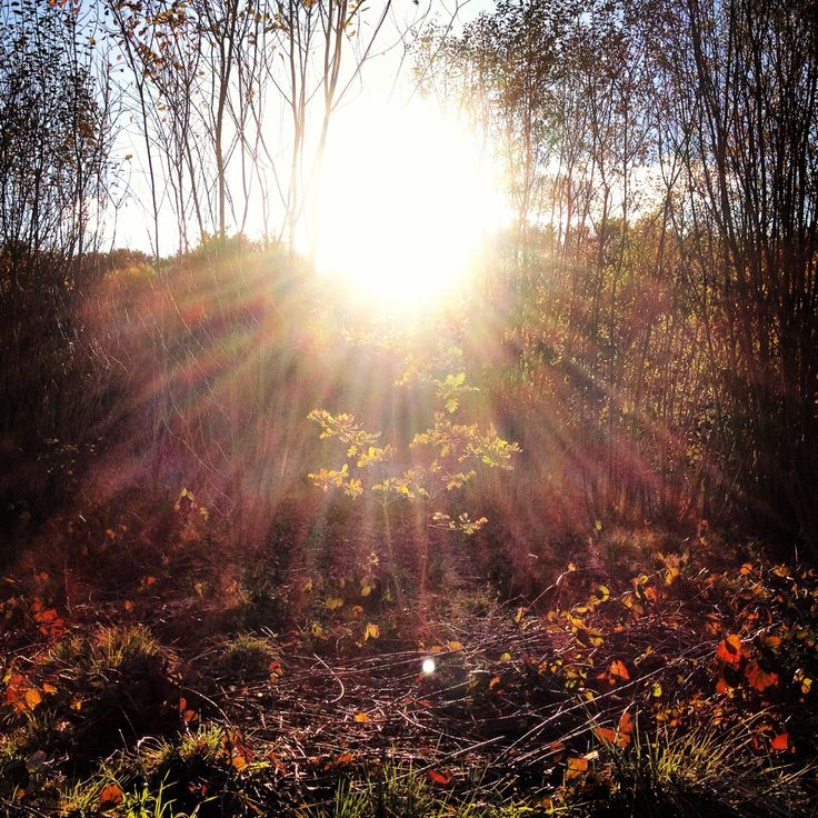 Forest leaves sun