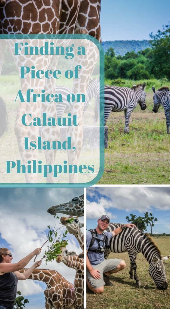 Visiting Calauit Island in the Philippines. we spent our first day traveling across the island with 4×4 trucks through rivers, dirt paths, rickety bridges and places where there really wasn't any roads on a mission to reach the northwestern side of Busuanga for a chance to explore Calauit Island. Click to read more at http://www.divergenttravelers.com/finding-piece-africa-calauit-island/