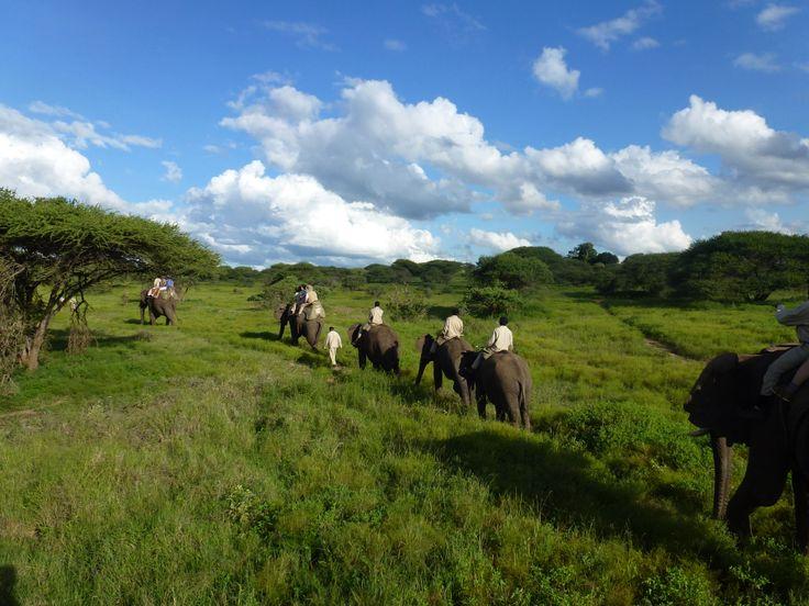 """Safari à dos d'éléphant au Relais & Châteaux """"Camp Jabulani"""""""