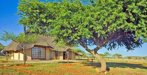 Mosu Lodge, Mokala Mosu is located in the rugged wilderness of South Africa's Northern Cape. Each thatched-roof chalet is air-conditioned and well-furnished. The camp has a swimming pool, and guests can spot the Big 5 on self-drives, hikes and 4x4 trails.