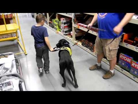 On Command Canine Training Center /Autism Service Dog Training - YouTube