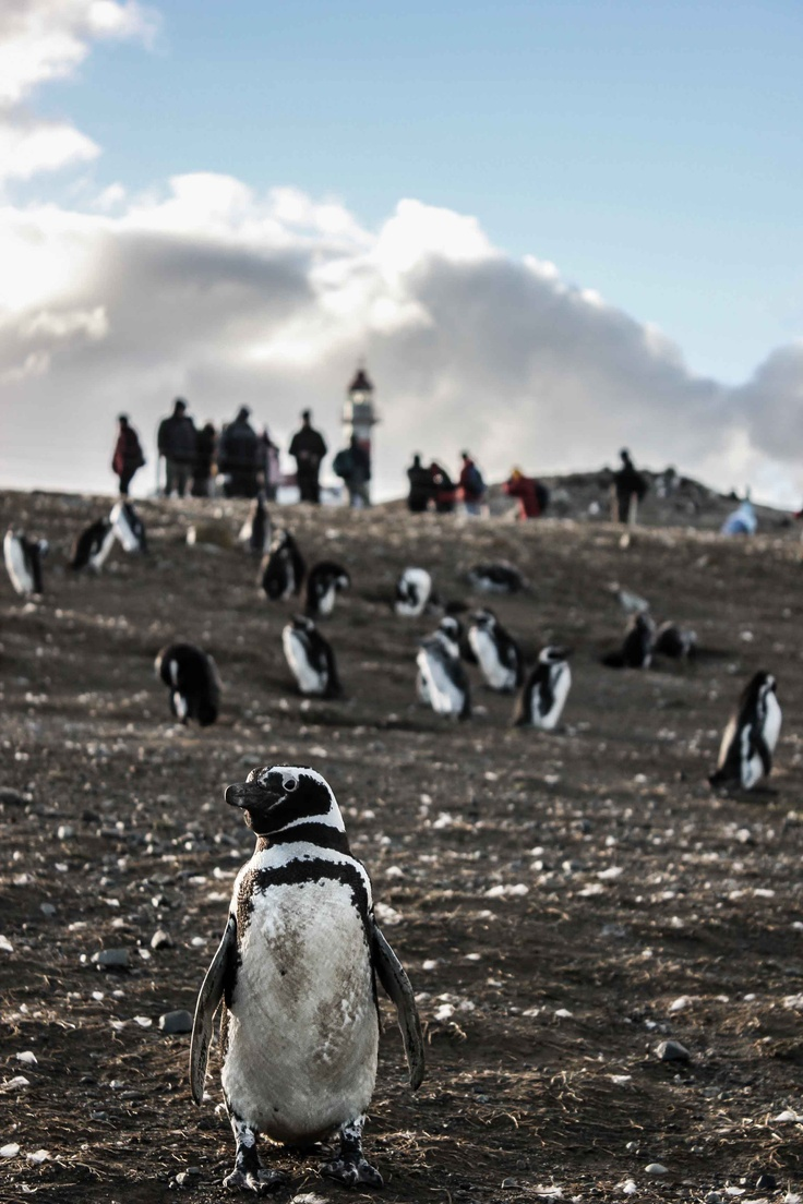 Isla Magdalena: Monumento Natural Los Pinguinos. Punta Arenas. Patagonia, Chile. foto: emiliO!