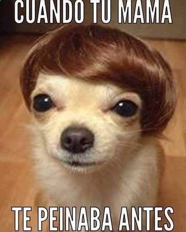 Jajajaja que mono ... #memes #chistes #chistesmalos #imagenesgraciosas #humor www.megamemeces.c... ➧➧➧ http://www.diverint.com/imagenes-comicas-banana-split