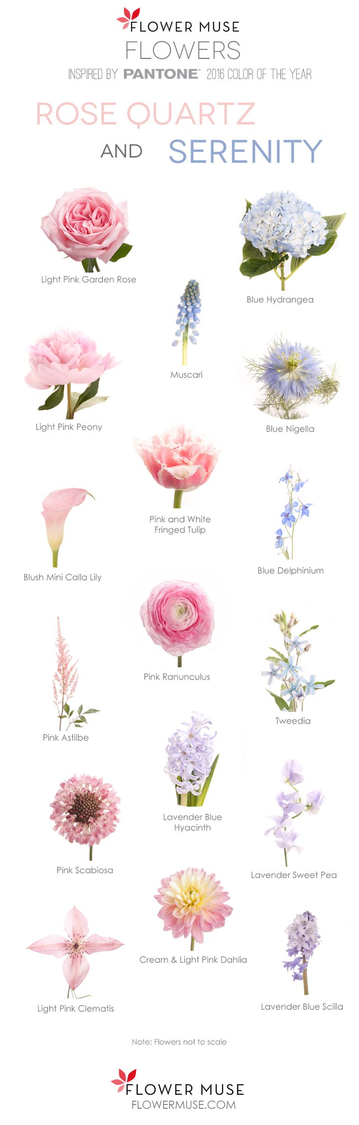 32 best flores images on pinterest flowers bouquets and floral 2016 pantone color of the year rose quartz and serenity flower inspiration see mightylinksfo