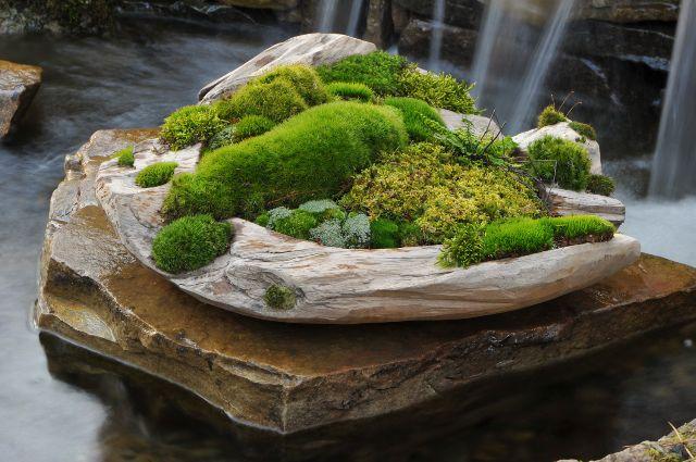 Jardin miniature fait de différentes mousses