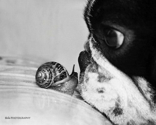 Snails, Puppies, Animal Baby, French Bulldogs, Pets, Baby Animal, Boston Terriers, New Friends, Kisses