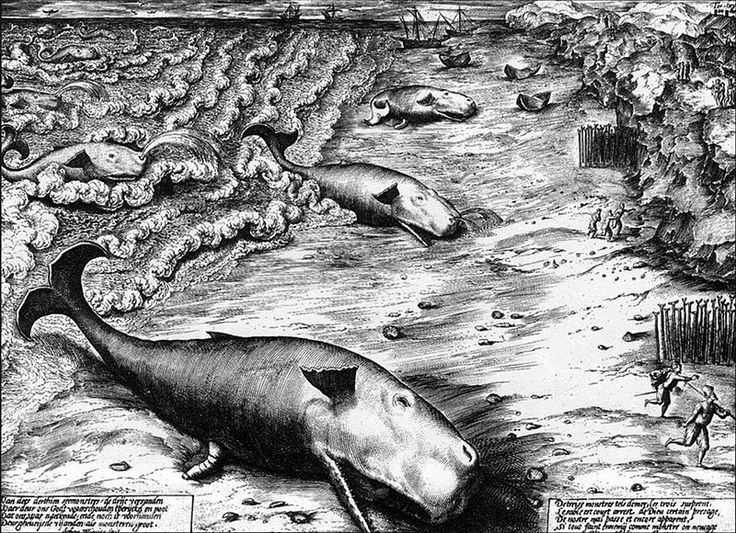 Three Beached Whales, a 1577 engraving by Jan Wierix, depicts stranded Sperm Whales.