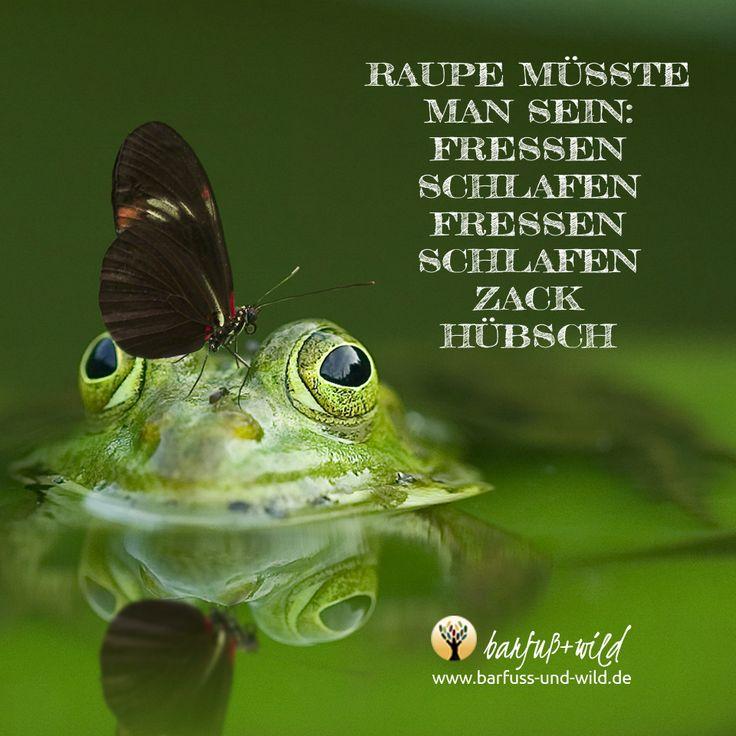 An alle Frösche, die noch nicht geküsst wurden ... wer möchtest Du sein?  Jan Frerichs/barfuß+wild - Franziskanische Lebensschule: www.barfuss-und-wild.de