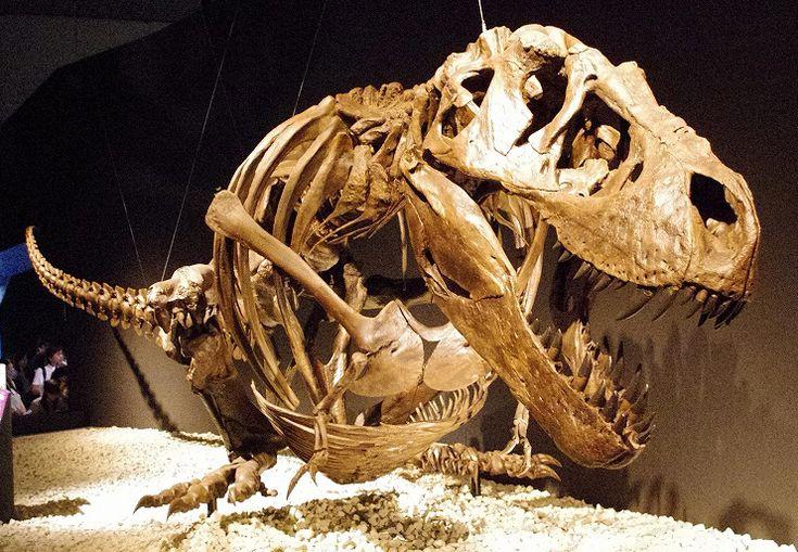 Le Burke Museum Seattle ouvre ses portes à une découverte rare – les restes d'un…