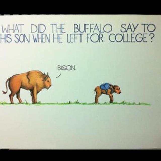 7 Best Cow Jokes Images On Pinterest Hilarious